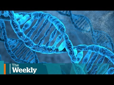 Can DNA from genealogy sites solve murder cases?